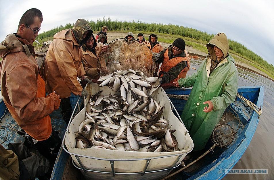 север красноярского края рыбалка и охота видео