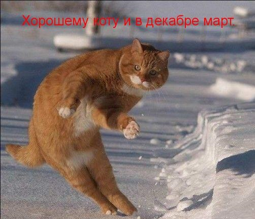 http://s00.yaplakal.com/pics/pics_original/4/1/3/9338314.jpg