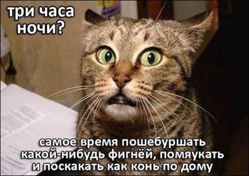 Обязанности кота в доме