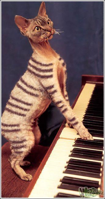 Гламурные кошки (30 фото)