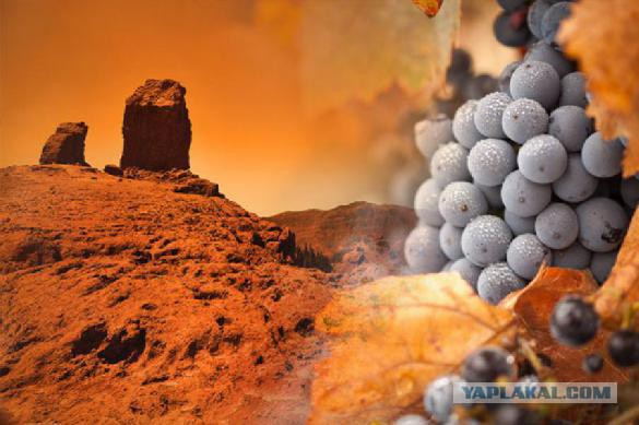 Грузия планирует культивировать виноград на Марсе