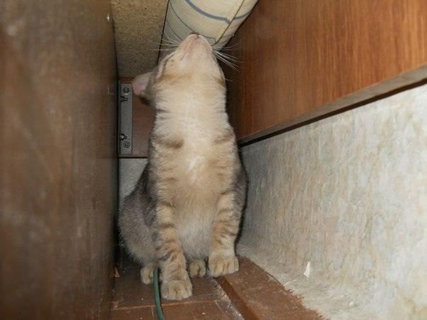ЯПовцы котенку нужна ваша помощь