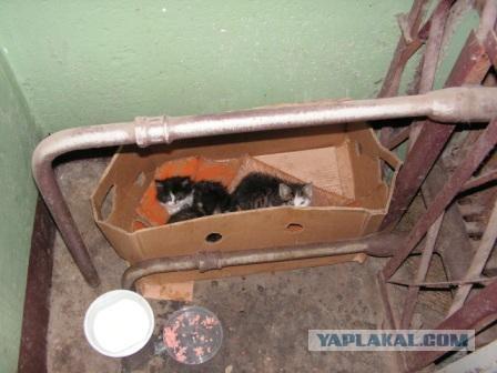 Три маленьких котенка ждут помощи!