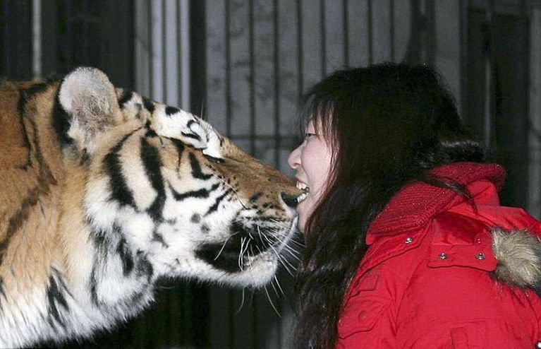 А вы бы смогли укусить тигра за нос?