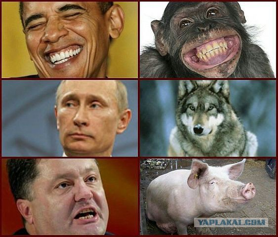Волк - свинье и обезьяне не товарищ