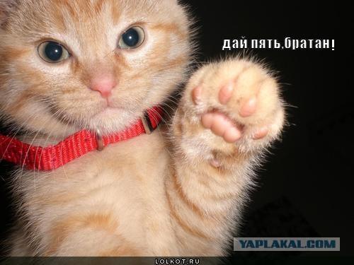 Кот дружелюбный