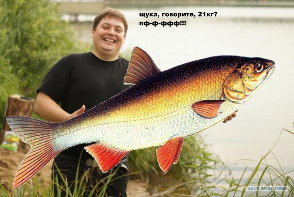 Щука путина 21 кг