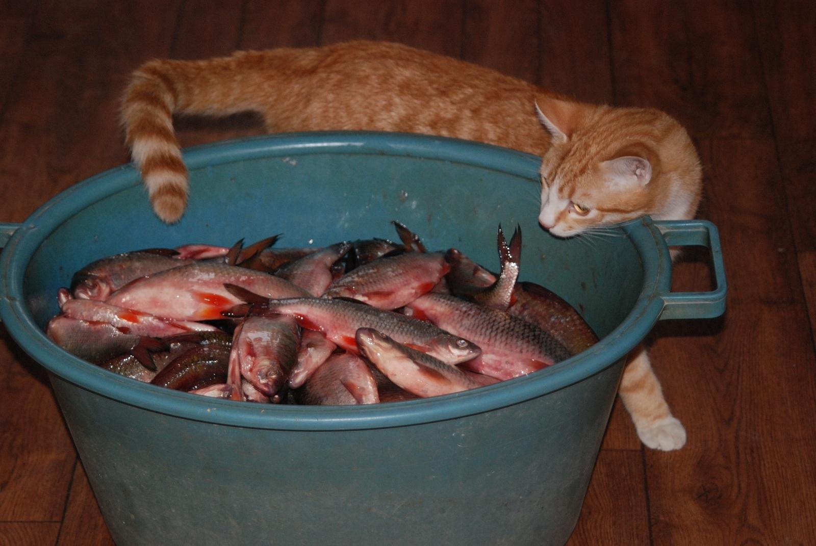 зимняя прикормка для рыбы своими руками рецепты