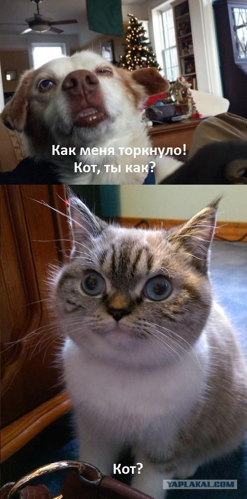 http://s00.yaplakal.com/pics/pics_original/4/3/1/8790134.jpg