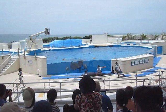 Дельфин выпрыгнул из бассейна (5 фото) - юмор, анекдоты, фотографии, игры.