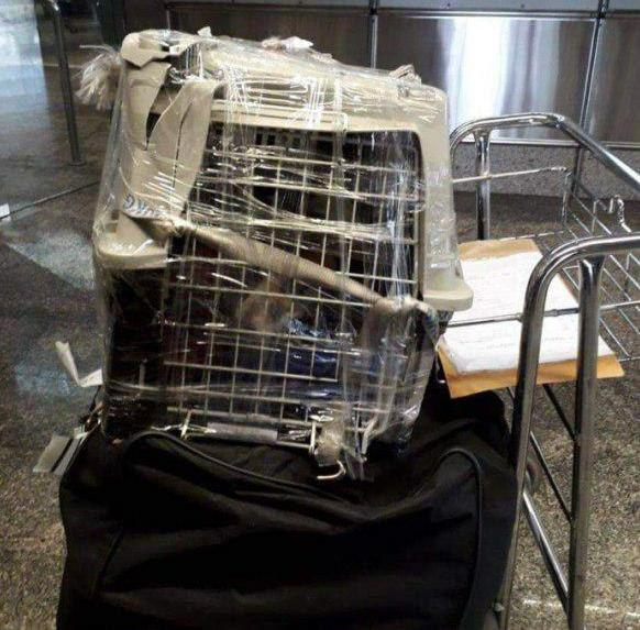 «Аэрофлот» сломал клетку для перевозки животных во время рейса, замотал её СКОТЧЕМ и отправил дальше