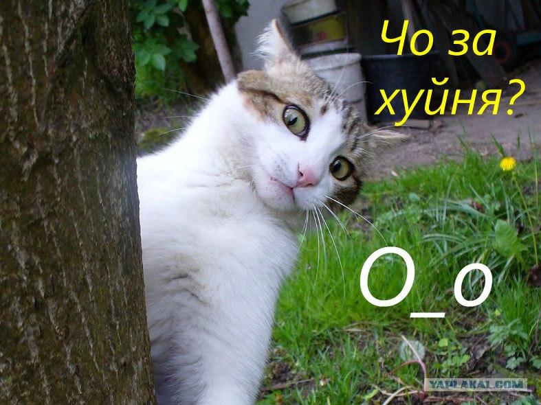 картинки кошек с надписями.