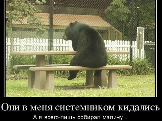 Житель села отбился от медведя системником.