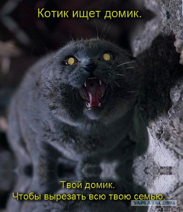 Я отпиздил своего кота