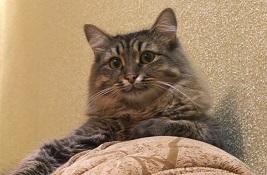 Помогите пристроить котейку в Саратове/Энгельсе