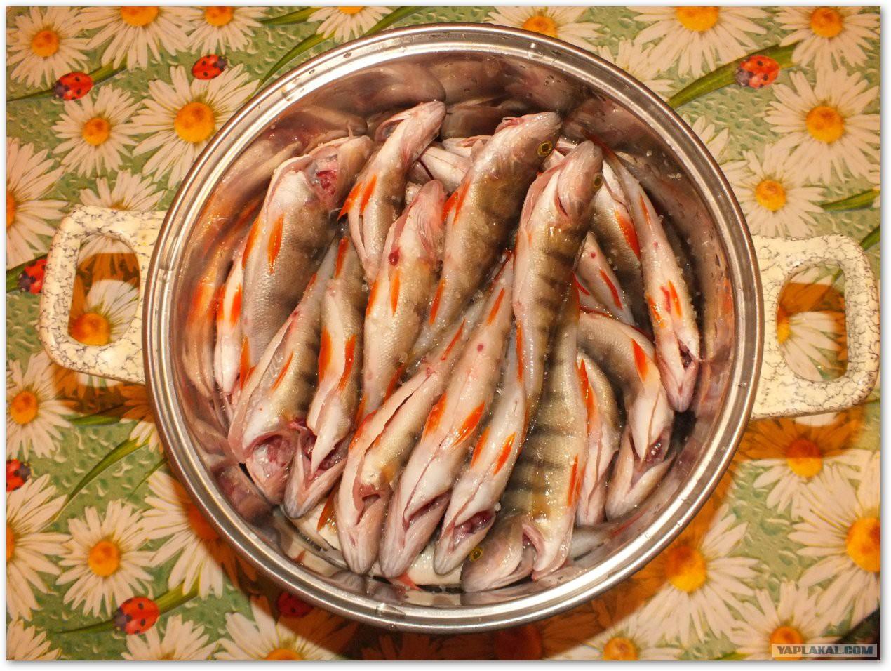 Соление и вяление рыбы в домашних условиях 28