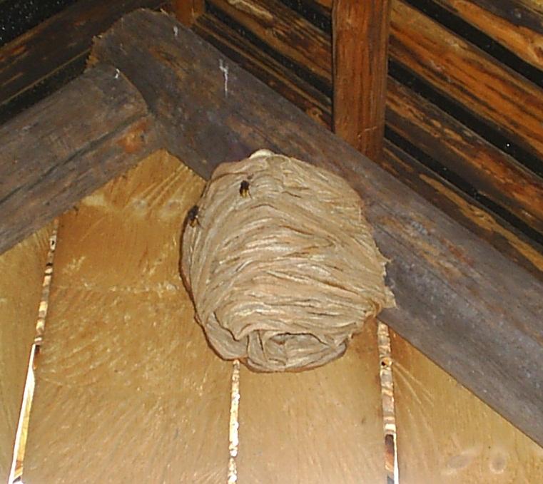 Гнездо для шмелей