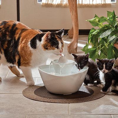 Поильник для кота