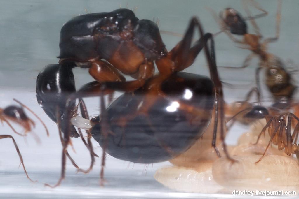 Давненько не было муравьёв.