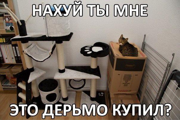 Очередной котодом на ЯПе (лёгких путей не ищем)