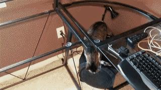 """""""Снял стеклянную столешницу почистить, кот не понимает почему не может запрыгнуть как раньше"""""""