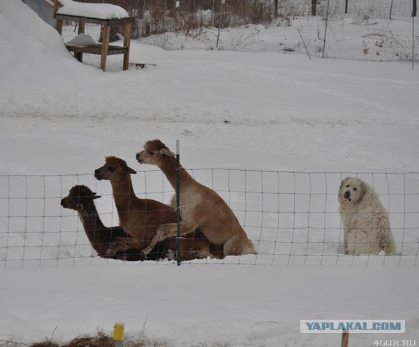Прикольные картинки на понедельник ...: www.yaplakal.com/forum2/st/200/topic1092293.html