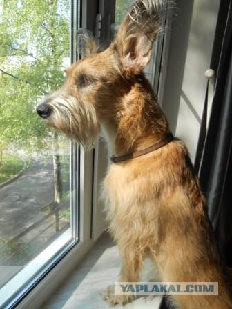 Собакоистория которая началась в январе