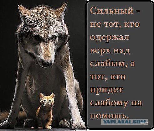 http://s00.yaplakal.com/pics/pics_original/4/7/0/3057074.jpg