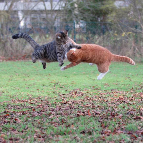 игры котов