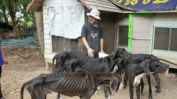 Король Таиланда приютил 13 голодающих догов
