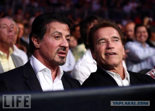Шварценеггер и Сталлоне смотрят бой Кличка