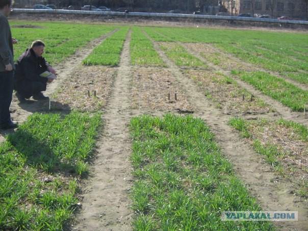У знаменитого аграрного ВУЗа России отбирают 100 гектаров опытных полей, садов, ипподром и ферму!