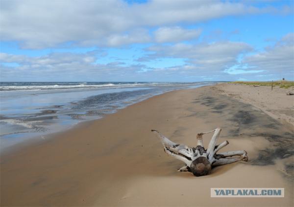 отдых у белого моря летом