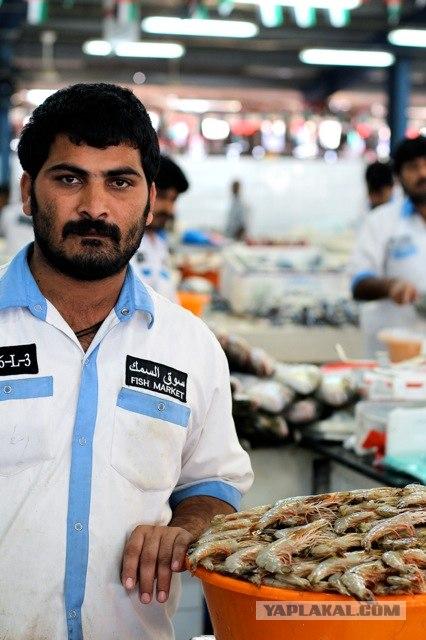 Дубай. Рыбный рынок и его обитатели