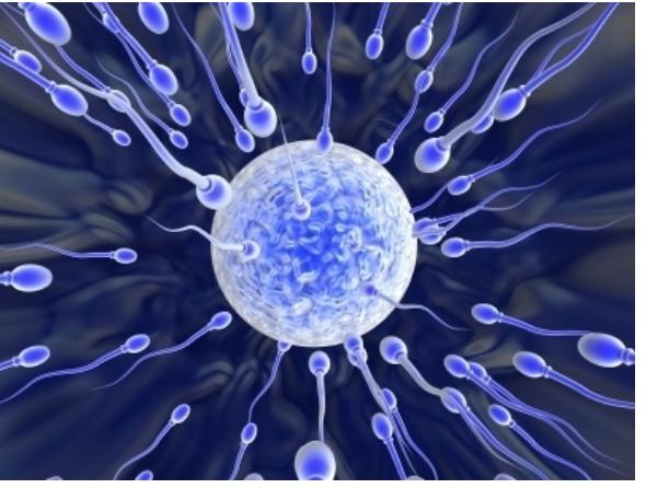 kakoe-vremya-zhivet-spermatozoid