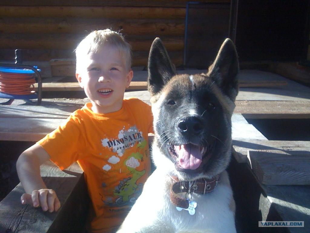 знакомство ребенка с кошкой и собакой
