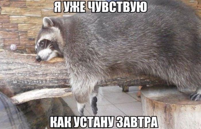 Нацполиция не может набрать недостающих патрульных из-за Киевсовета, - Деканоидзе - Цензор.НЕТ 5375