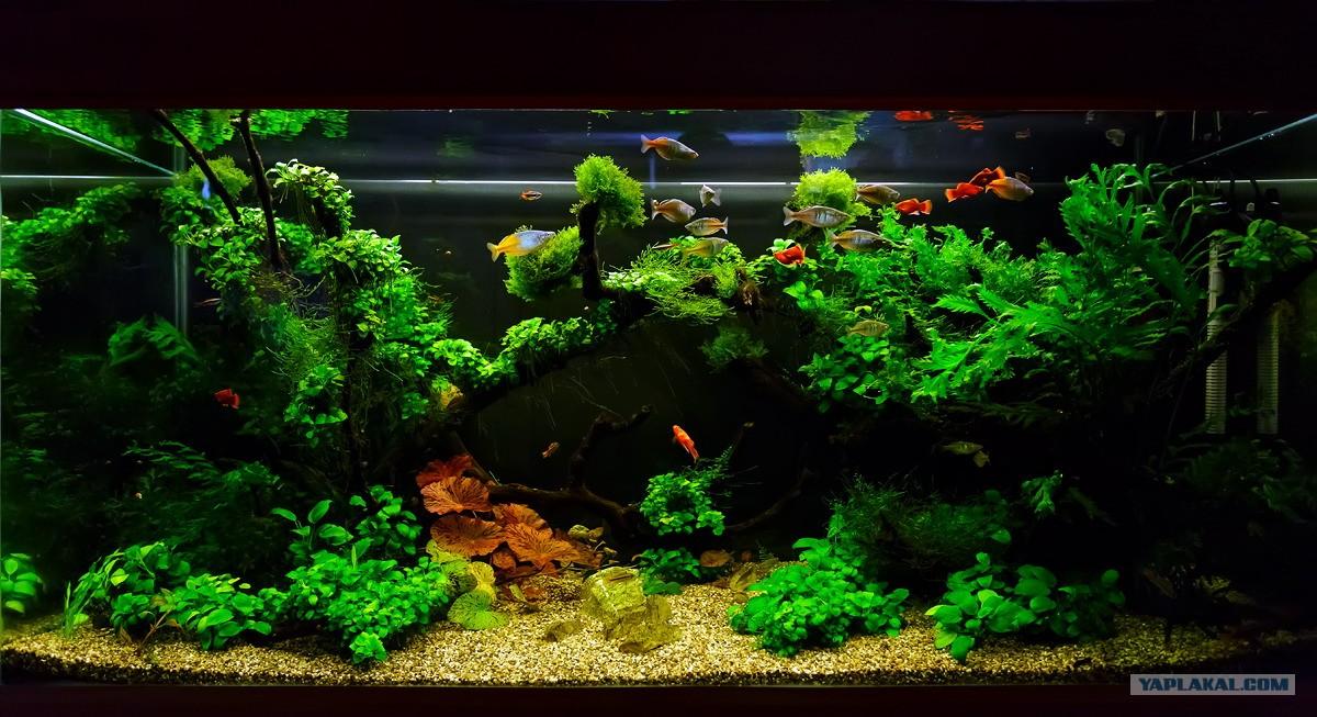 Объемный фон аквариум своими руками