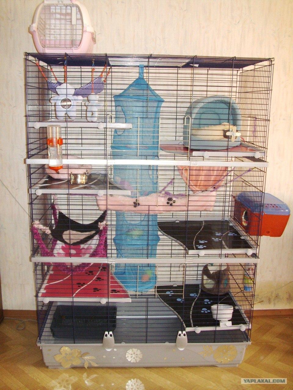 Домик для крысы своими руками 80