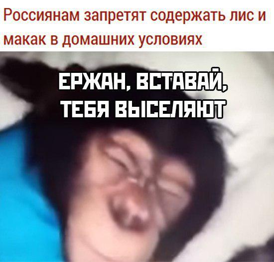 Россиянам запретят содержать лис и макак в домашних условиях
