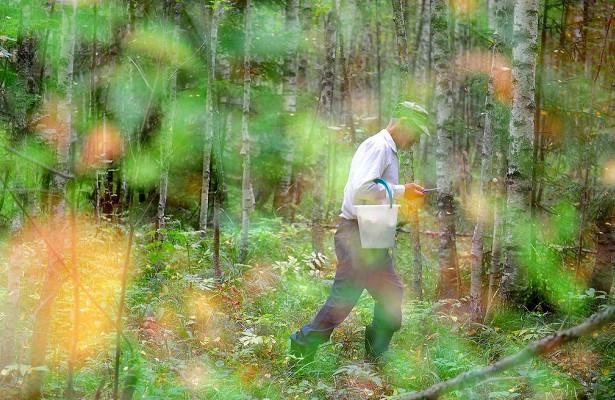 «Может дорого обойтись»: заблудившихся грибников предложили наказывать