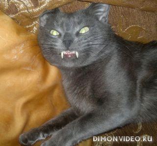 Саблезубые коты фото