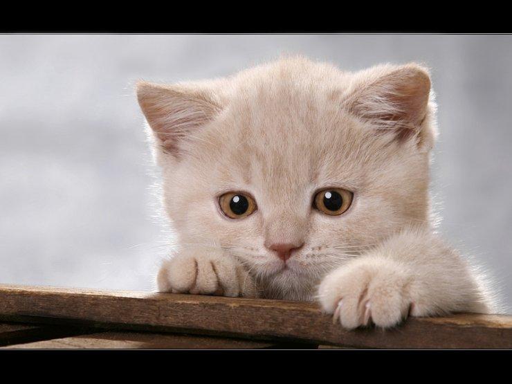 """������ ����� � ������ """"Euro Cats """"1 �����"""