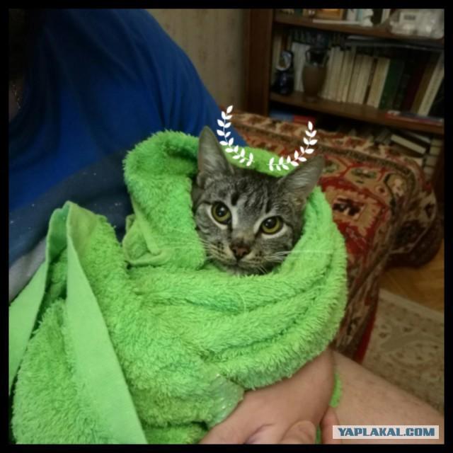 Пост-шанс! Котик с короновирусом ищет срочно дом без других котов