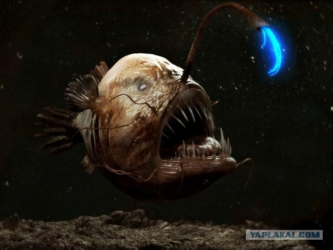 фото морской черт рыба