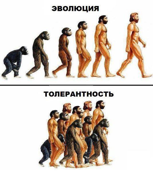 В чем отличие эволюции и толерантности?
