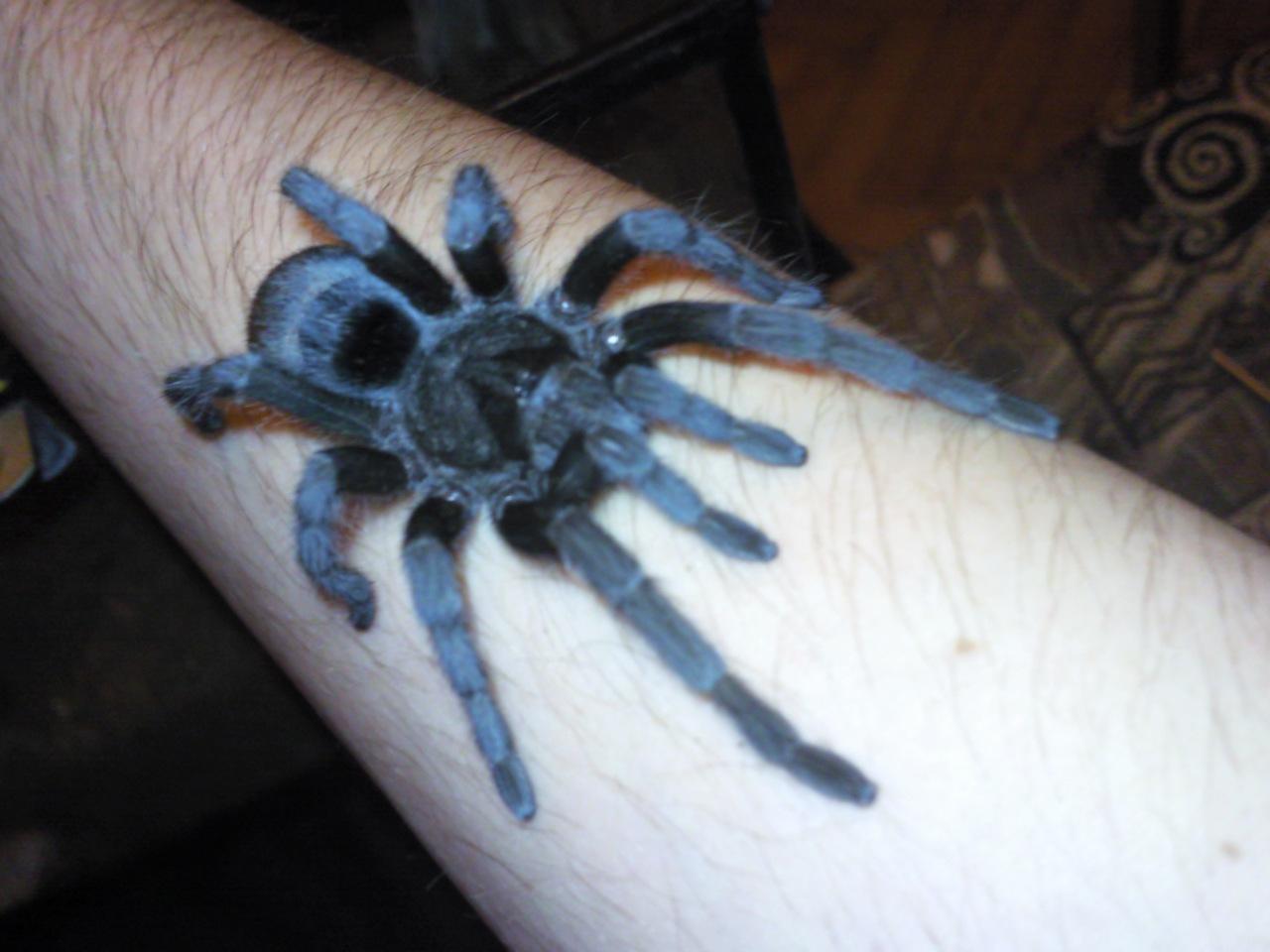 Содержание тарантула у домашних условиях 706