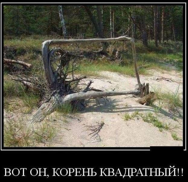 http://s00.yaplakal.com/pics/pics_original/5/1/6/12923615.jpg