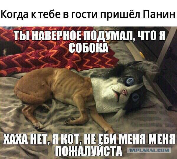 Панин ответил про собаку