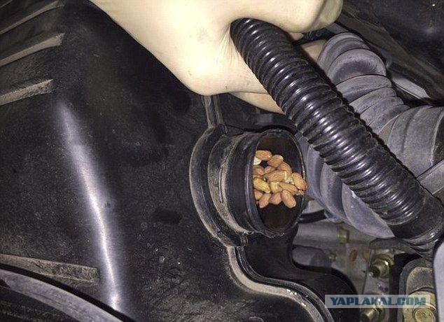 Склад беличьих запасов в двигателе автомобиля